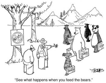Bearssuitcases2